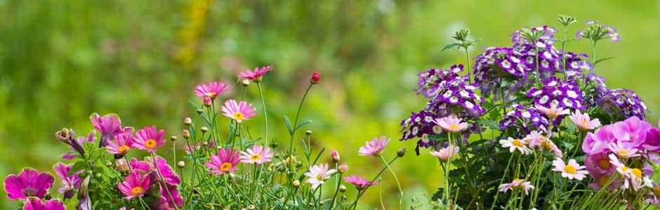Gartenpflege Gartenarbeit Gartenhilfe Gärtner Rasenpflege Rasen mähen vertikulieren Stauden Teich Pflege Obstbaum Baum fällen Sträucher schneiden